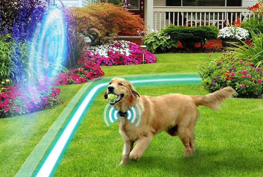ELECTRIC DOG FENCING